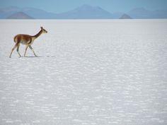 Uyuni Salt Flat, explora Travesía Uyuni