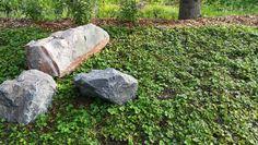 Perennamatolla nopeasti valmista pintaa pihalle. Lisäksi luonnonkiviä.