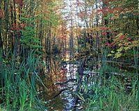 wisconson-woodland-forest-bg.jpg (200×160)