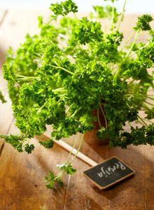 Garden Plants, Herbs, Gardening, Women, Home Decor, Decoration Home, Women's, Room Decor, Garten