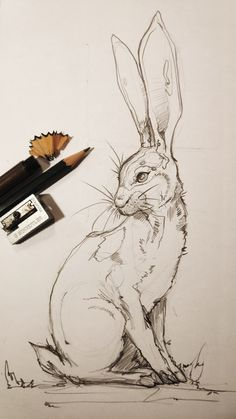 to draw easter bunny Drawing of a pencil drawing rabbit. How to draw easter bunny Drawing of a pencil drawing rabbit.,How to draw easter bunny Drawing of a pencil drawing rabbit. Sketch Art, Art Drawings Sketches, Cool Drawings, Realistic Drawings, Beautiful Pencil Drawings, Unique Drawings, Drawing Faces, Rabbit Drawing, Rabbit Art