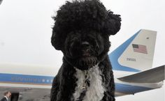 Daily Cute: Bo Obama's Sweetest Moments As First Dog | Care2 Causes