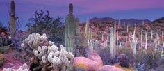 #cactus #california #texas #marfa #sunset #marcocorso #hulagirls #hulaworld
