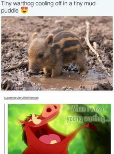 Young Warthog