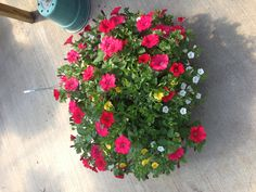 Won't find many growers with baskets like these! Like us on fB too !