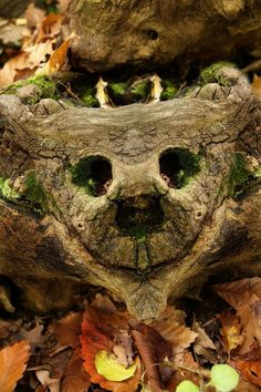 A tree face in the leaves
