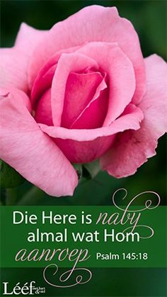 Psalm 145 18, Goeie More, Afrikaans Quotes, Psalms, Words, Flowers, Royal Icing Flowers, Flower, Florals