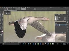 Adobe Illustrator - Line Art and colour - How to draw a bird - YouTube