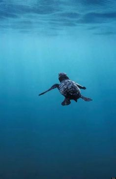 be free, little turtle