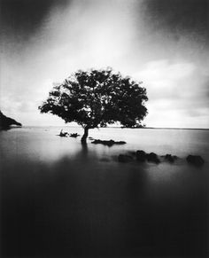 mangrove lamu: By Fred De Casablanca, more artworks http://www.artlimited.net/2249 #Photography #Pinhole #Nature #Scenery #Waterscape