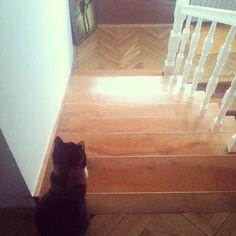waiting...  #cat #cats