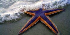 Приказка за Детето и Морската звезда! - Mediaplus