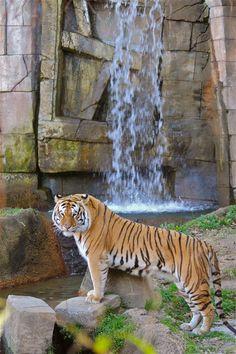 Memphis Zoo (by Lisa Richardson)