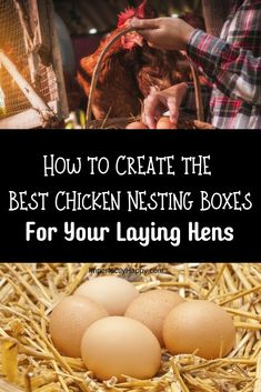 Create the Best Chicken Nesting Boxes for your Laying Hens Herbs For Chickens, Keeping Chickens, Pet Chickens, Raising Chickens, Chicken Laying Boxes, Chicken Nesting Boxes, Laying Boxes For Chickens, Nesting Boxes For Chickens, Backyard Poultry