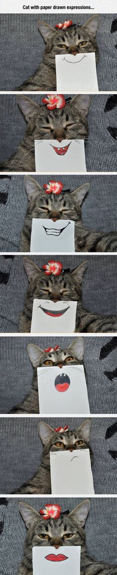 Cats With Paper Drawn Expressions cute animals cat cats adorable animal kittens pets kitten funny pictures funny animals funny cats