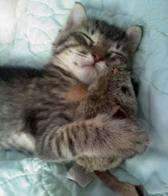 Cat snuggling with a stuffed toy