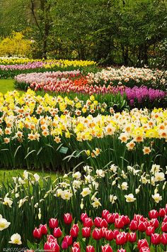 Keukenhof Gardens, Holland  by Natali Antonovich, via Flickr