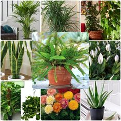 Plants that clean the air of the house We all love the house (salon) plants, or the greener people f Love Is All, This Is Us, Plant Breeding, Medicinal Plants, Garden Plants, Aloe, Diy And Crafts, Succulents, Cleaning