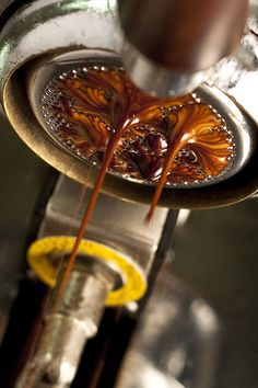 Creamy espresso goodness. Pulling the perfect shot