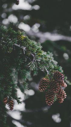 """Come away, oh, human child"": Photo Wallpaper Natal, Christmas Phone Wallpaper, Christmas Aesthetic Wallpaper, Christmas Wallpaper, Nature Wallpaper, Iphone Wallpaper, Wallpaper Pictures, Wallpapers Wallpapers, Pretty Wallpapers"