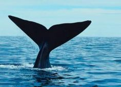 Cape Cod for April break. The whale watch was not disappointing!