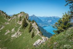 Schynige Platte in the Bernese Oberland: A hike like out of the .- Schynige Platte im Berner Oberland: Eine Wanderung wie aus dem Bilderbuch Schynige Platte hike Jungfrau Bahn - Hiking Routes, Road Trip Europe, Excursion, Snow Skiing, Rock Climbing, Alps, National Parks, Scenery, Places To Visit
