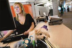 Una dipendente di Google al post di lavoro con il suo cagnolino comodamente sistemato sul tavolo.