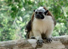 jungle land panama – a family adventure not soon forgotten Click image to read post #familytravel #panama #monkey