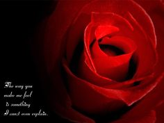 love quotes pictures | Love Rose Wallpaper With Love Quotes « 123greety.com