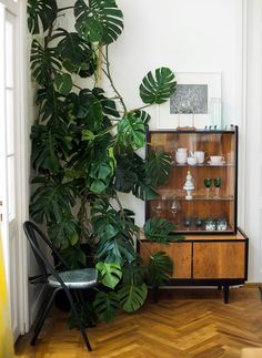 Retro urban jungle met vintage kast in interieur in Rusland // via Sight Unseen