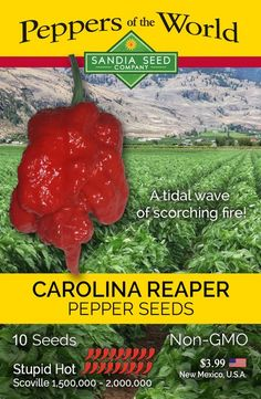 The Carolina Reaper is still the hottest chilli in the world in There are lots of other chilli peppers out there like the Dragon's Breath Chile and Pepper X, but. Growing Vegetables From Seeds, Worlds Hottest Pepper, Carolina Bbq Sauce, Chilli Plant, Paprika Pepper, Growing Peppers, English Garden Design, Pepper Plants, Pepper Seeds