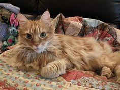 This pretty pussy looks like Mum's cat Sam.