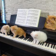 Every truly cultured music student knows you must learn your scales and your arpeggios!
