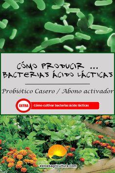 Manual práctico para producir bacterias ácido lácticas y mantenerlas en el tiempo mediante un cultivo selectivo. Probiótico natural totalmente orgánico. Plastic Pallets, Compost, Agriculture, Growing Up, Homemade