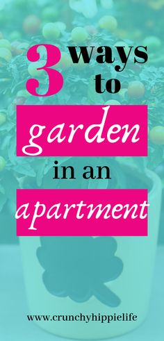 How To Garden in an Apartment for Fresh Produce Anywhere