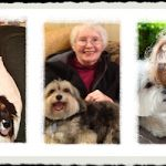 Honoring the Wolf Family legacy of animal advocacy: ensuring lasting pet connections through microchips with a grant from the ASPCA
