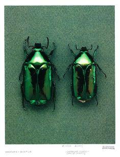 groen | green | vert | grün | verde | 緑 | color | colour | texture | style | form | beetle