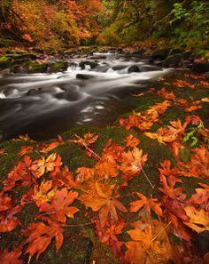 Autumn at Grist Mill Creek ~ Vancouver, Washington