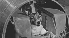 Laika, first dog in space