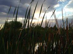 Wetlands park Las Vegas Nevada.