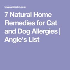 7 Natural Home Remedies for Cat and Dog Allergies | Angie's List