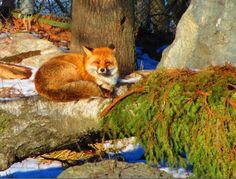Matkojeni blogi: Aikamatka eiliseen ja pakkaseen, Kansankoti 24.02.2016 Camera Obscura, Rocky Horror, Culture Travel, Ecology, Gotham, Sherlock, Travel Photos, Fox, Animals