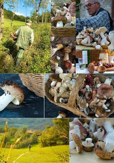 Mushroom Hunting in the Hills of Le Marche