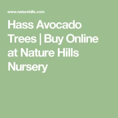 Hass Avocado Trees | Buy Online at Nature Hills Nursery