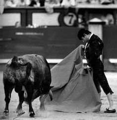 El deseo vence al miedo. Spain, Rey, Nature, Racing, Hipster Stuff, Wish, Flamingo, Taurus, The Great Outdoors