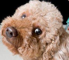 Ladrones matan a perritos en medio de escalamiento en Bayamón - Mascotas 24/7