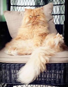 Click to see 12 of the world's angriest cats and despite their irritated faces, they are all extremely cute!