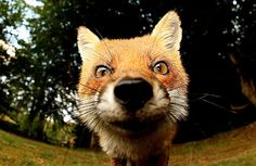 This reminds me soooo much of The Fox in The Little Prince movie <3