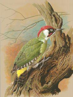 Green Woodpecker Bird Print Home decor Nature Woodland garden art Summer gift items