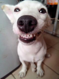 eurosaurus - smiling dog from tailandia